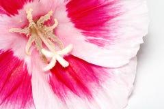 Flor sobre o branco fotografia de stock