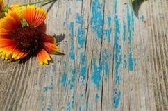 Flor sobre uma placa de madeira velha Foto de Stock Royalty Free