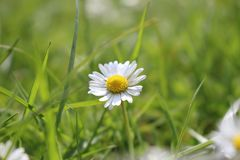 Flor sola imagenes de archivo