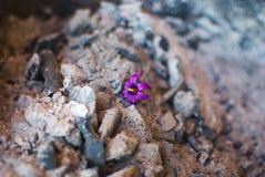 Flor sola Fotos de archivo
