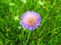Flor sola Fotos de archivo libres de regalías