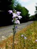 Flor sola del borde de la carretera foto de archivo