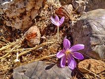 Flor sola en la colina del soporte Tahtali, Turquía Fotografía de archivo