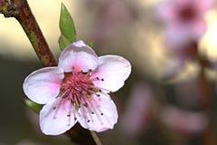 flor sola en la frontera Imagen de archivo libre de regalías