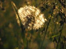 Flor sola por la mañana Imagen de archivo