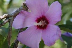 Flor solitária Foto de Stock