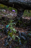 Flor solitaria Fotografía de archivo libre de regalías
