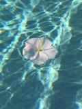 Flor solitaria Imágenes de archivo libres de regalías