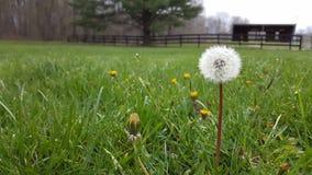 Flor solitaria Imagenes de archivo