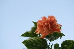 Flor solitaria Stock Photo