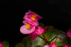 Flor sombreada Imagenes de archivo