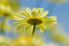 Flor sonhadora Fotografia de Stock Royalty Free