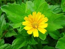 Flor sonriente Fotos de archivo libres de regalías