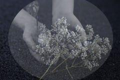 Flor sostenida en manos imagenes de archivo