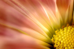 Flor suave Fotos de archivo