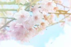 Flor suave del estilo del color y de la falta de definición Imágenes de archivo libres de regalías