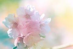 Flor suave del estilo del color y de la falta de definición Fotografía de archivo libre de regalías
