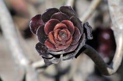 Flor suculenta Foto de archivo