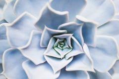Flor suculenta fotografía de archivo