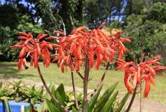 Flor suculenta de la planta Fotos de archivo