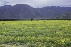 Flor super de Borrego Springs imagem de stock royalty free