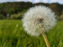 Flor tan cerca Foto de archivo