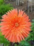 Flor tan hermosa como usted imagen de archivo