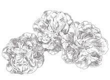 Flor tirada mão ilustração stock