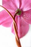 Flor torcida Imágenes de archivo libres de regalías