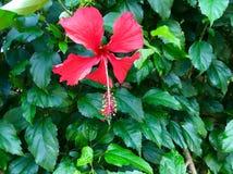 Flor tropical imagens de stock royalty free