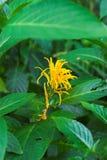 Flor tropical foto de stock royalty free