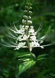 Flor tropical Imagem de Stock