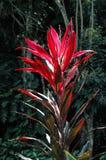 Flor tropical Fotos de archivo