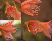 Flor tropical foto de archivo