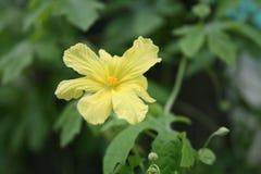 Flor tropical fotografia de stock
