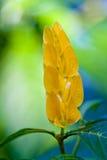 Flor tropical fotos de archivo libres de regalías