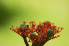 Flor tropical Imagen de archivo libre de regalías