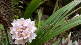 flor tropical Blanco-rosada Foto de archivo libre de regalías