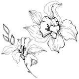 Flor tropical da orquídea do vetor Elemento isolado da ilustração Ilustração Royalty Free