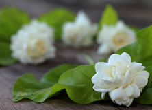 Flor tropical del jazmín en la madera Flores y hojas del jazmín en el Br imagen de archivo libre de regalías