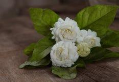 Flor tropical del jazmín en la madera Flores y hojas del jazmín en el Br foto de archivo