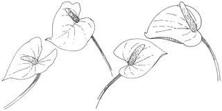 Flor tropical em um estilo do vetor Elemento isolado da ilustração Ilustração Stock