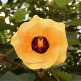 Flor tropical en Asia Fotografía de archivo libre de regalías