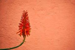 Flor tropical en fondo rojo Imágenes de archivo libres de regalías