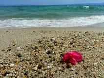 Flor tropical en la playa Fotos de archivo libres de regalías