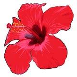 Flor tropical hermosa en un fondo blanco Imagenes de archivo