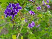 Flor tropical púrpura Imagen de archivo libre de regalías