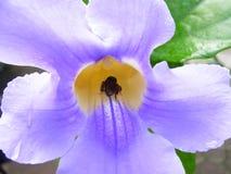Flor tropical purpúrea clara Imagen de archivo libre de regalías