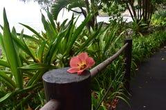 Flor tropical que senta-se em um cargo entre a floresta tropical tropical na costa imagem de stock
