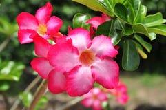 Flor tropical roja Fotografía de archivo
